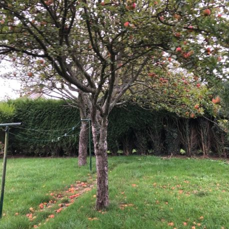 Jardin – maison F5 – St Pierre des Fleurs – ST Immobilier Elbeuf